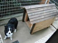 中型犬用厚板タイプボーダーコリー