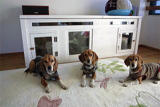 室内犬の防音犬小屋